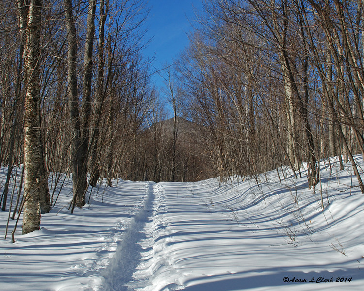 Starting up the Bunnell Notch Trail.  Nice and easy so far for a nice warm up