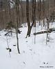 Still slowly gaining elevation in the open hardwoods